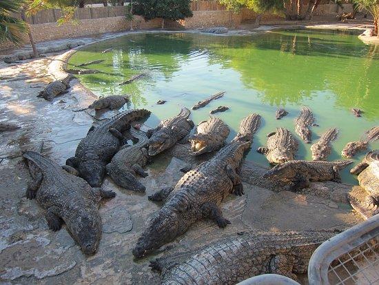 Midoun, Tunísia: Крокодиловая ферма на о. Джерба Тунис