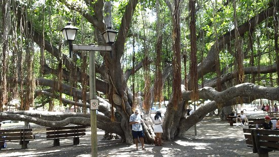 Banyan Tree Park : Just a small part of the tree