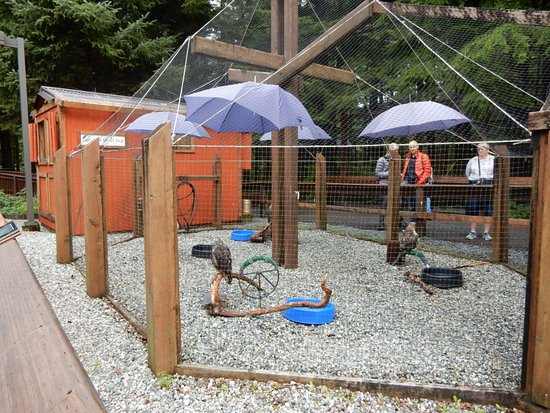Alaska Raptor Center: The Hoot House