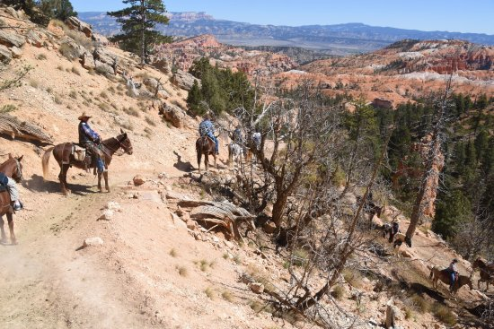 hoo doos bild von canyon trail rides bryce canyon nationalpark tripadvisor. Black Bedroom Furniture Sets. Home Design Ideas