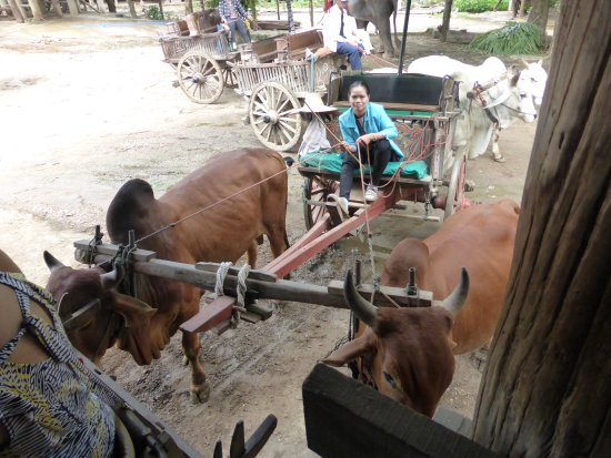 Thai Buffalo Training Camp
