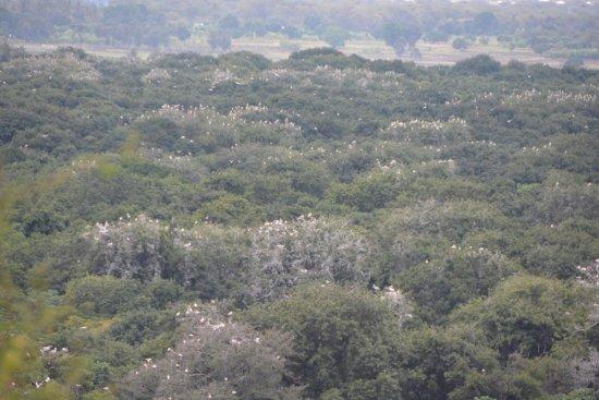Lake Manyara National Park, Tanzania: photo1.jpg