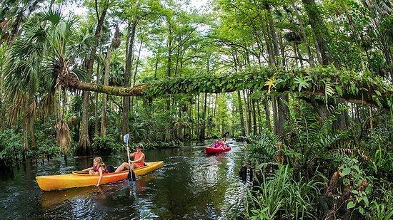 Coconut Kayak Tours