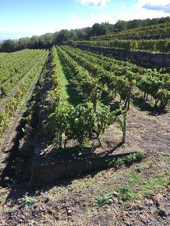 Linguaglossa, Italia: Belle vignes.