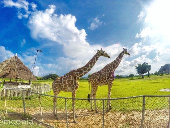 Busuanga Island, Filippine: photo0.jpg