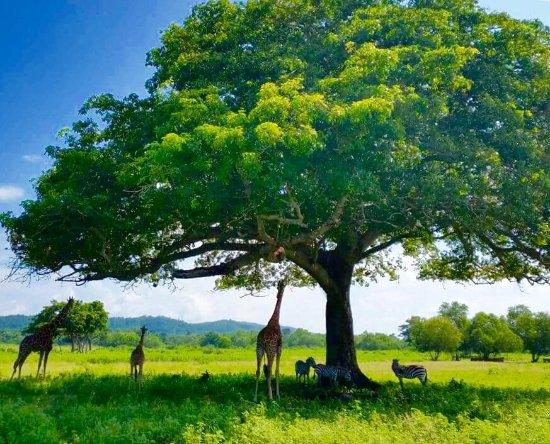 Busuanga Island, Filippine: photo1.jpg