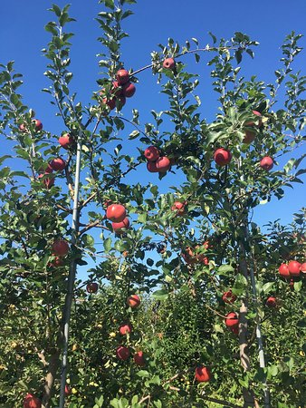 Warwick, NY: Ochs Orchard