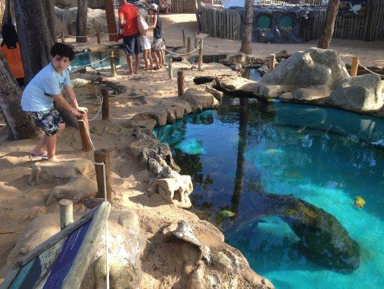 Мата-ди-Сан-Жуан: Tanque dos tubarões lixa.