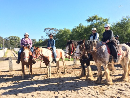 Horseback Winery Tours: The birthday girl was granted her wish of a Clydesdale!!