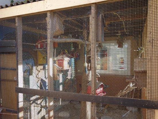 Best Western Antelope Inn & Suites: Aviary