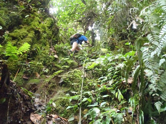 Guapiles, Costa Rica: hike down to one of the waterfalls