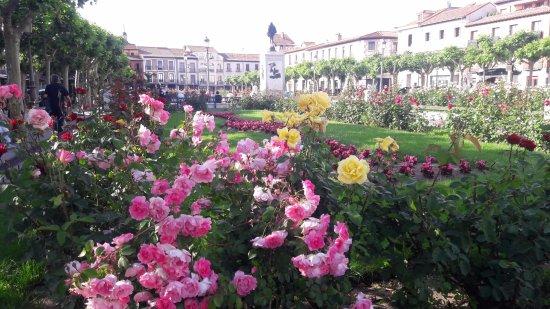 Alcalá de Henares, España: Hermosa