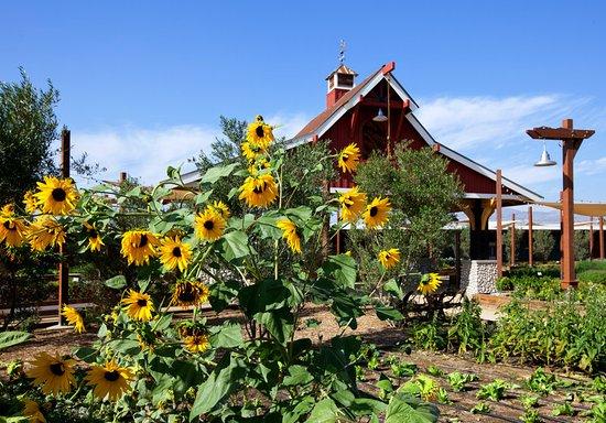 Pomona, Californië: Farm Detail