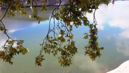 Wilson Square: Rio Garona