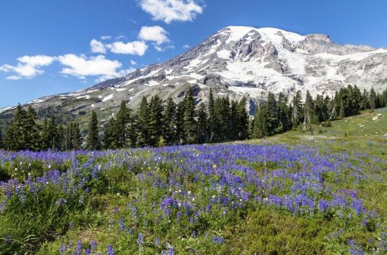 Private Mt Rainier National Park Day...