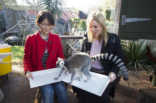 Adelaide Zoo Hinter den Kulissen...