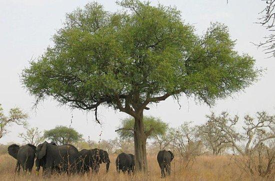 The Lobéké National Park