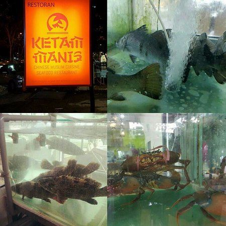 Cyberjaya, ماليزيا: We serve live seafood to maintain the freshness!!