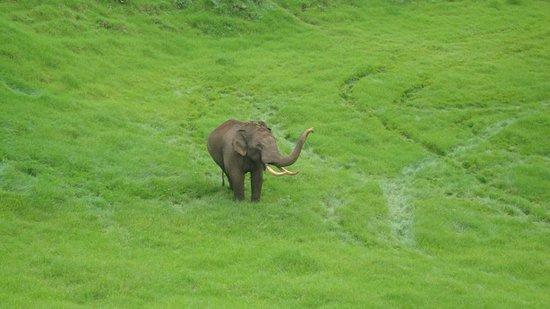 Uluppuni Wildlife Santuary Vagamon