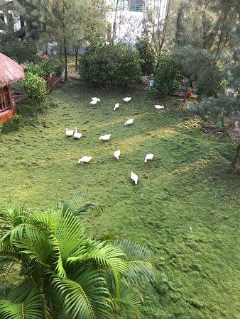 Dayapur Island, Ινδία: photo7.jpg