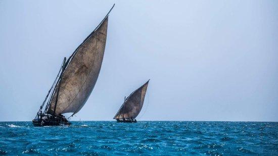 Sahari Zanzibar : Blue safari