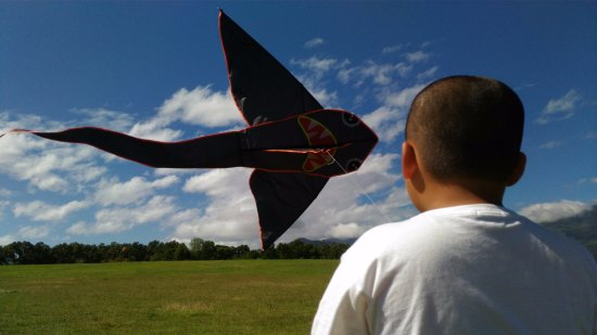 Luye Gaotai Kite Shop & Kite DIY