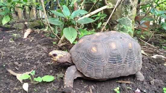 Jardin Botanico del Quindio: P_20171016_123516_large.jpg
