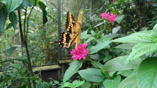 Jardin Botanico del Quindio: P_20171016_123439_large.jpg