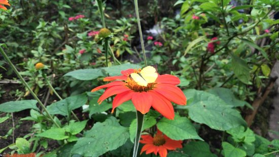 Jardin Botanico del Quindio: P_20171016_123011_large.jpg