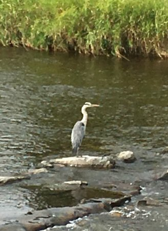 Clarion Hotel Hirschen: A heron on the river which flows at the rear of the hotel.