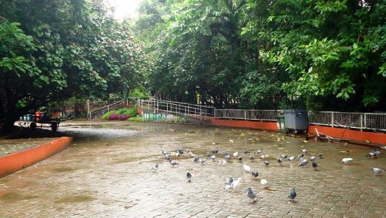 Davao City, Filippine: I enjoyed watching the pigeons up close and personal. They won't mind your presence.