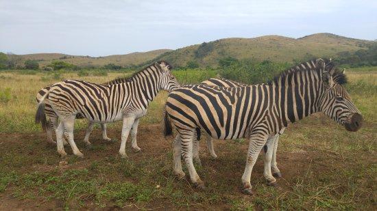 Zululand 사진