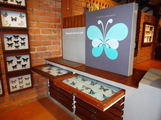 Malagos Garden Resort : Butterfly Museum
