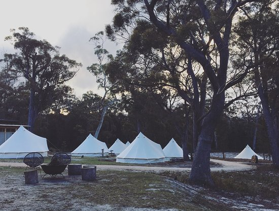 Binalong Bay, Австралия: View of Bell Tents from the fire pit