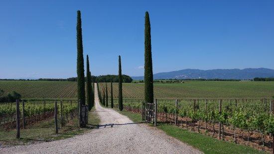 Herentals, Belgium: Cipressen  en wijngaard va, Antinori