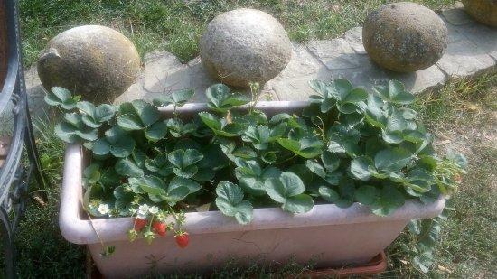 Diano d'Alba, إيطاليا: Agriturismo Il Convivio