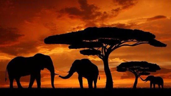 GBT Tanzania Adventures
