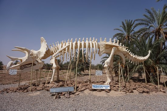 Fossil Gallery