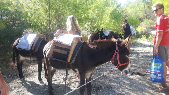 Donkey Cruise