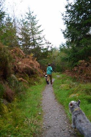 woodland trail at 7Stanes Dalbeattie