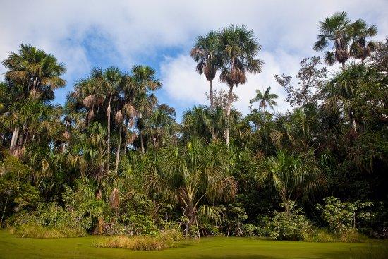 Landscape - Picture of Los Amigos Birding Lodge, Puerto Maldonado - Tripadvisor