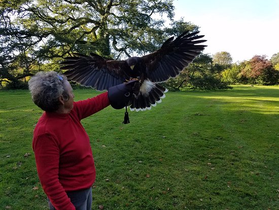 Thomastown, Irlanda: Ozzie coming in for a landing