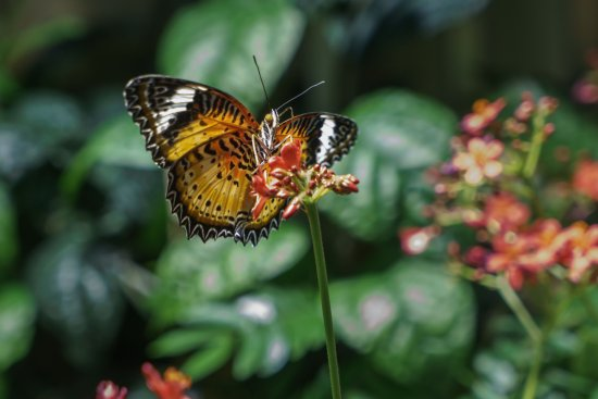 Smithsonian National Museum Of Natural History: Butterflies + Plants Exhibit