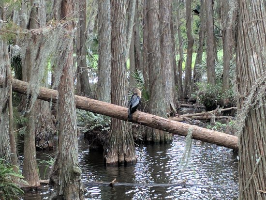 Wesley Chapel, FL: Nature Walk Bridge