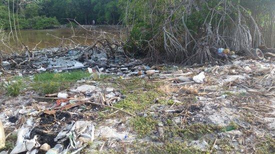 Исла-Бару, Колумбия: L'iguane au milieu des ordures ; regardez la couleur de l'eau derrière...