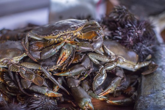 Ibo, Mozambique: Daily catch of crabs