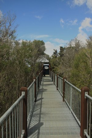 Pemberton, Australia: Lake Muir Boardwalk