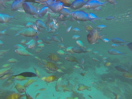 Baclayon, Filipiny: Marine Sanctuary