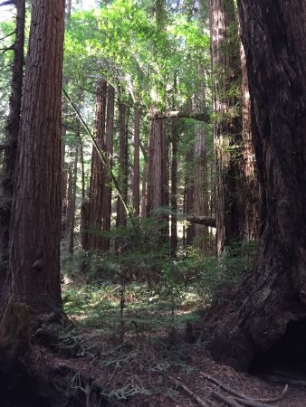 Muir Woods National Monument Mill Valley Ca What You