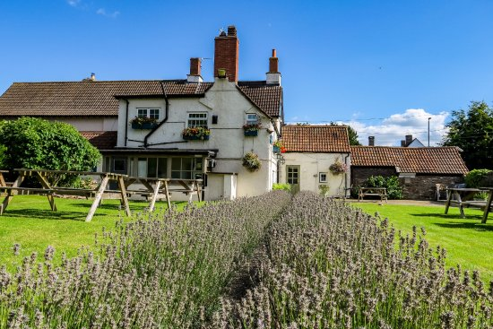 Nibley, UK: Our lavender garden is perfect for a cool drink in the Summer!